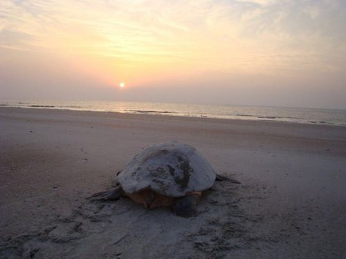 Turtle sunset