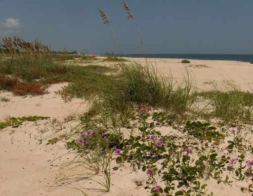 Vero Beach 015