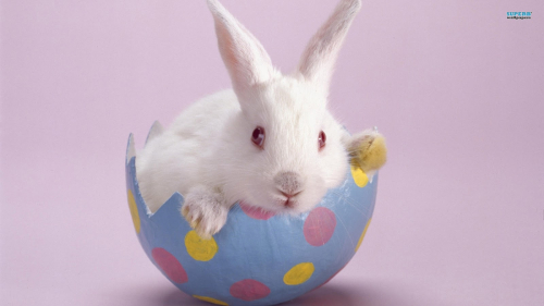 Easter-bunny-holiday