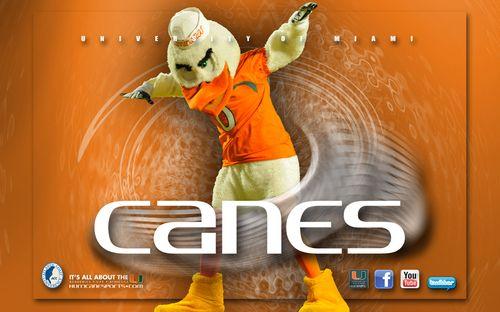 Go Canes Ibis